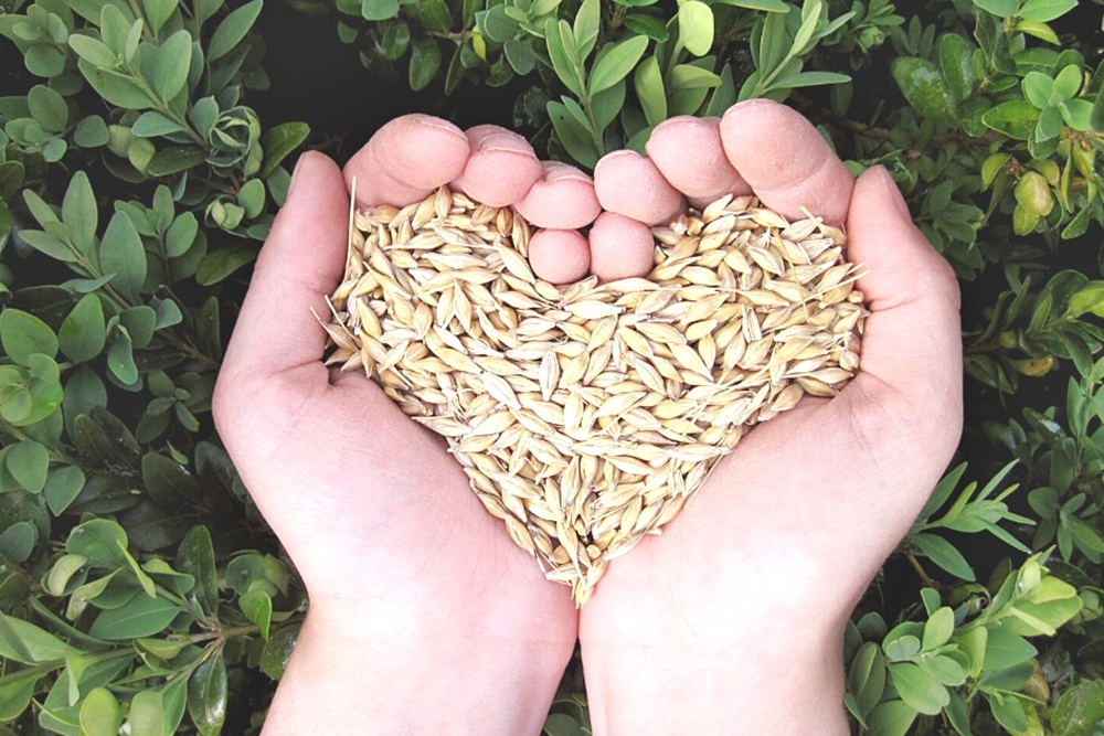 吃月餅還能抽高檔水波爐!我愛國產雜糧支持在地小農~加碼抽大獎一波接一波!