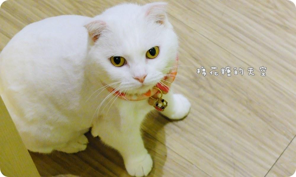 店貓小白5.JPG