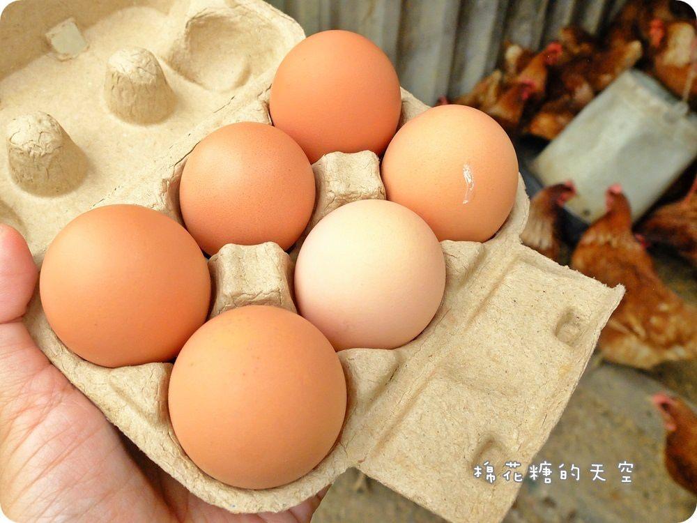 安心食材推薦‖福壽生態農場三大認証牧草雞、牧草豬、牧草雞蛋美味又安心,內文有超簡易麻油雞做法
