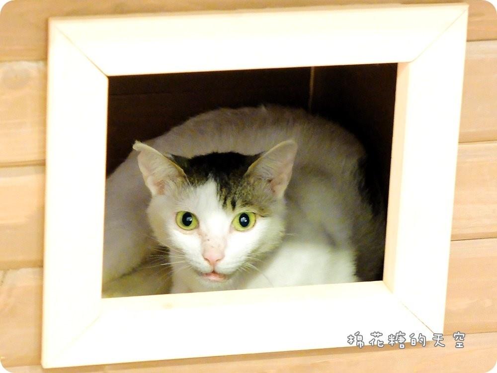 店貓領養2.JPG