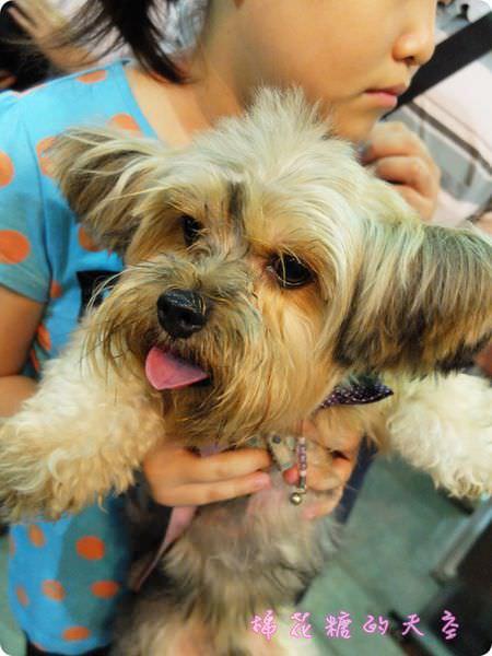 《台北活動》快帶毛孩子來台北寵物展找ddy!免費簡易寵物皮膚護理~現場消費打折又送贈品喔!