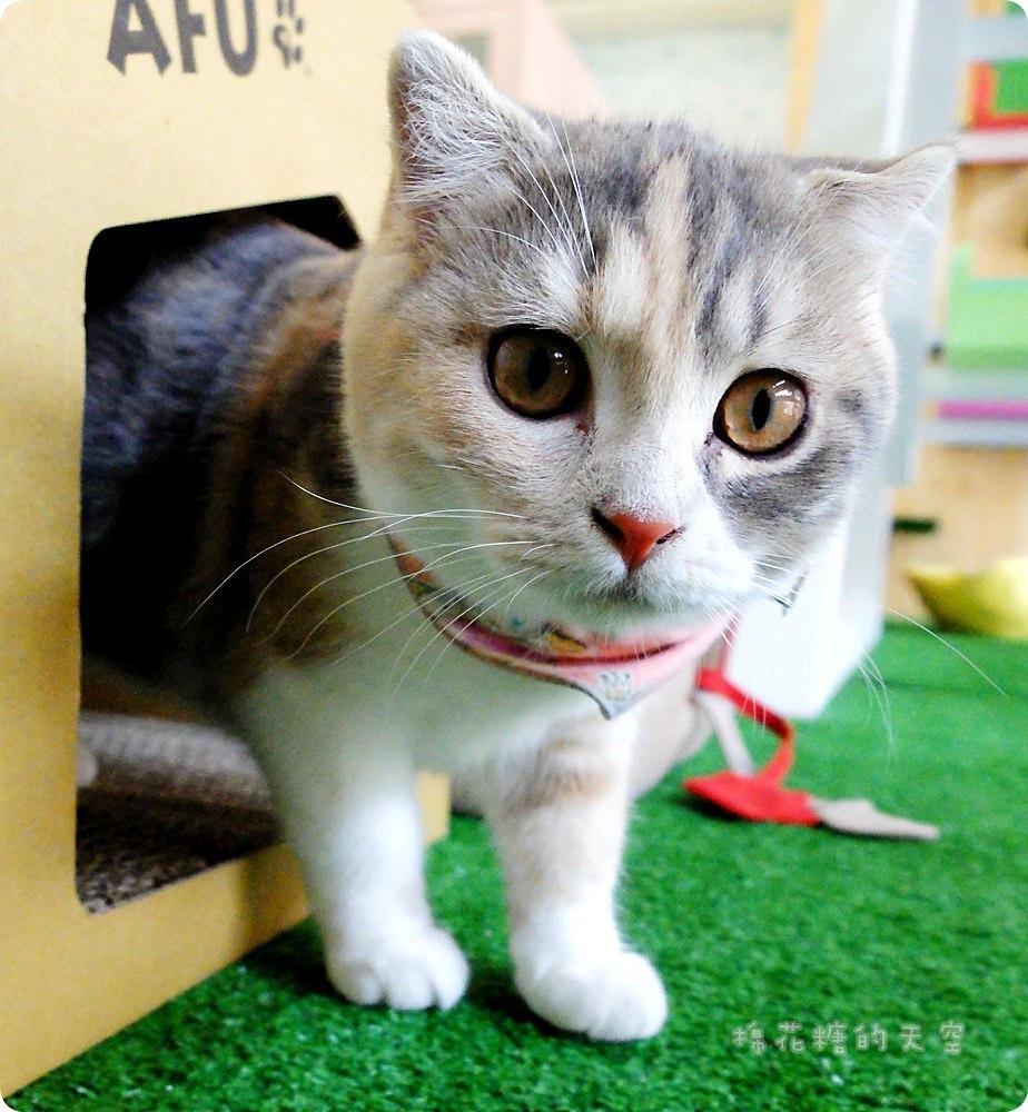 《台中毛孩子》超豪華瑋特台中貓咪旅館~環境舒服到連我都想住進去……